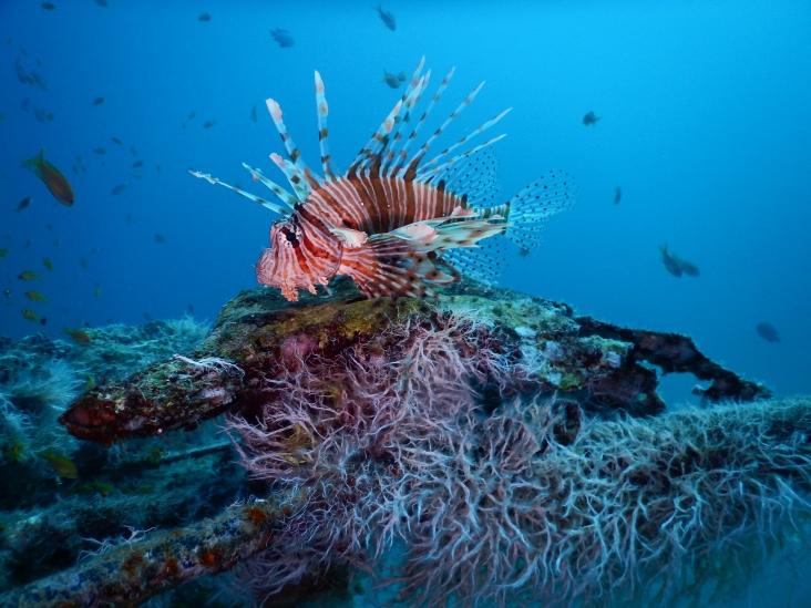 Rotes Meer... ganz klar ein Vertreter für das rote Meer :o)