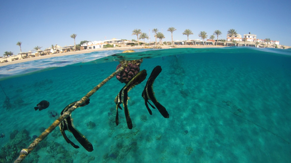 halb und halb Aufnahme mit Fledermaus Fischen und der Orca Tauchbasis